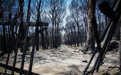 Incendi Vesuvio: pineta carbonizzata