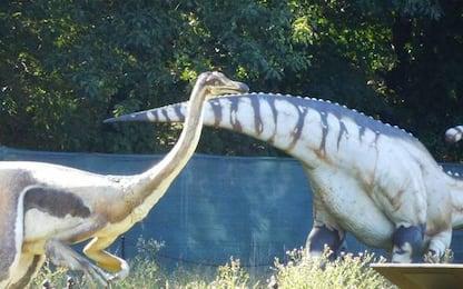 Rara forma di tumore scoperta nella coda di un dinosauro