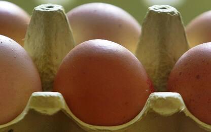 Fipronil, due nuovi casi: 90mila uova sequestrate a Viterbo e Ancona