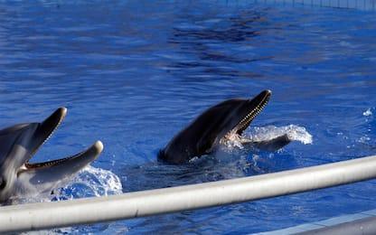 Maltempo a Roma: allagata parte del delfinario di Torvaianica
