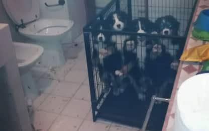 Milano, polizia locale libera cuccioli di cane da un appartamento