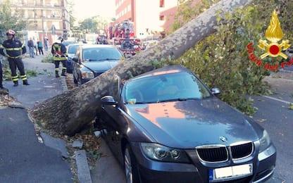 Milano, albero su auto per il vento