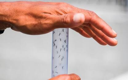 Zika, scoperta proteina che protegge da malattie neurologiche