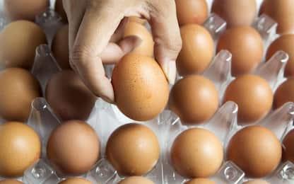Coldiretti, allarme uova: ne mancano 100 milioni al mese