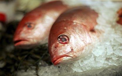 Palermo, sequestrata una tonnellata di pesce a Ballarò