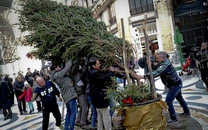 """Terzo raid contro """"Sparicchio"""", di nuovo abbattuto l'albero di Natale"""