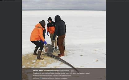 Gelo negli Usa, squali morti per il freddo in Massachusetts