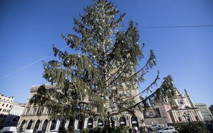 """Roma, per Natale torna """"Spelacchio"""" in piazza Venezia"""