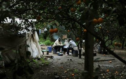 Migranti pagati 1 euro per cassa di frutta: 7 denunce e un arresto