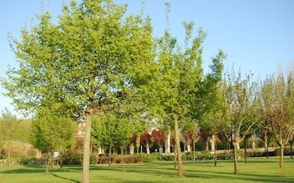 Meno guai respiratori per i bimbi cresciuti vicino ad aree verdi