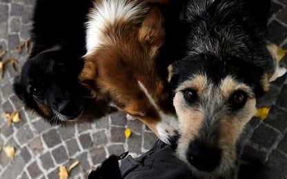 Hashtag24, gli animali domestici in Italia: 60 milioni 400mila