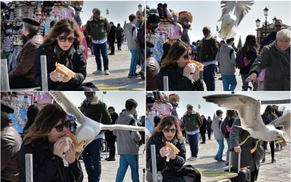 Gabbiano ruba il panino a una turista