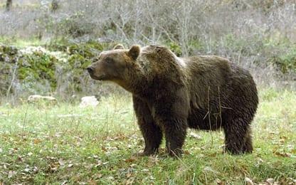 """Usa, bimbo di 3 anni sopravvive nel bosco: """"Ero con un orso"""""""