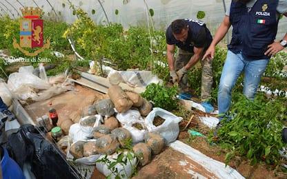 Scoperta serra con 900 chili di cannabis nel Ragusano, tre arresti