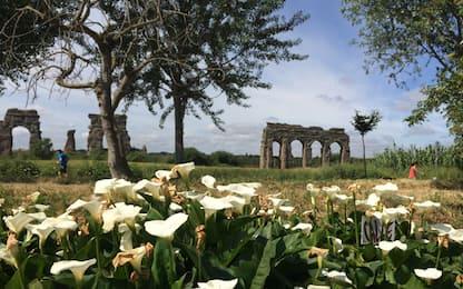 Torna l'Appia Day, domenica 13 maggio festa dell'antica Regina Viarum