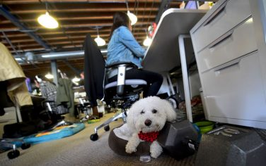 GettyImages-cane-ufficio-pet
