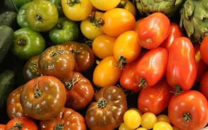 Sequenziati i geni di 100 varietà diverse di pomodori