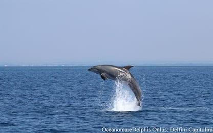 Decine di delfini avvistati tra Ostia e Fiumicino