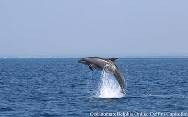 delfini_roma_ansa