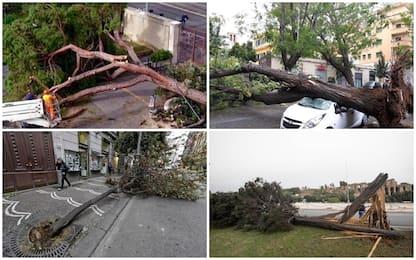 Maltempo, vittime e feriti in tutta Italia per alberi caduti