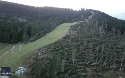 Dolomiti, gli abeti distrutti dal vento diventano alberi di Natale