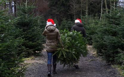 Albero di Natale 2018: meglio artificiale o naturale?