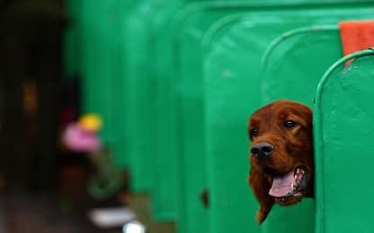 Bergamo, seppellì viva la sua cagnolina: 84enne chiede patteggiamento