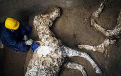 Scoperta eccezionale a Pompei, trovato il Sauro Bardato del generale