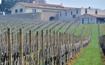 Prosecco, Guardian: coltivazione erode le colline. Zaia: solo invidia