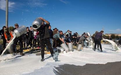 Rivolta del latte in Sardegna, i motivi della protesta dei pastori