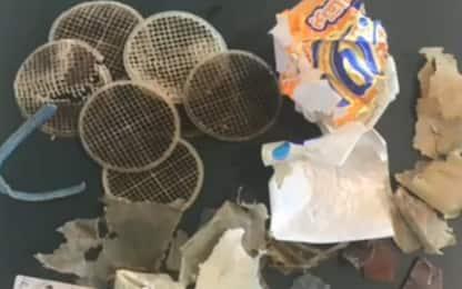 Marina di Camerota: tartaruga morta per aver ingerito plastica