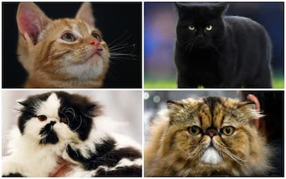 Giornata del gatto 2019, festa per circa 8 milioni di mici. VIDEO