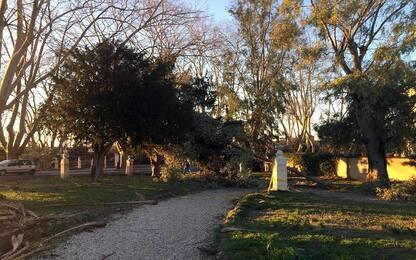 Roma, messi in sicurezza 2 alberi pericolanti in viale del Muro Torto