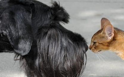 Dieta Barf, i rischi della moda alimentare per cani e gatti