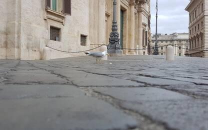 Roma, gabbiano goloso ruba gelati ai turisti in piazza Montecitorio