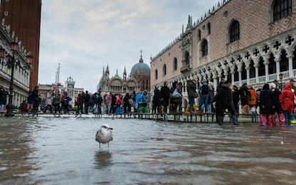 Venezia, le forti piogge riportano l'acqua alta