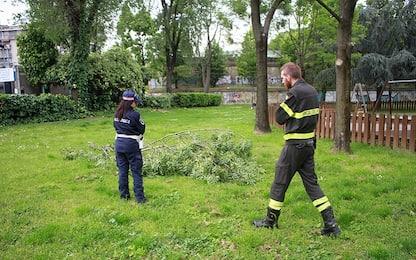 Milano, cade un ramo per il vento: bimbo di 9 anni ferito alla testa