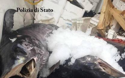 Palermo, sequestrata una tonnellata di prodotti ittici a Mondello