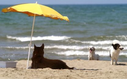 Cani in spiaggia, diritti e doveri: le regole per l'estate