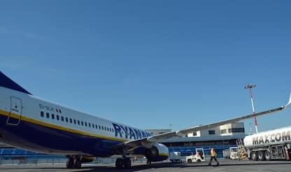 Fiumicino, sciame d'api blocca il volo Ryanair Roma-Catania