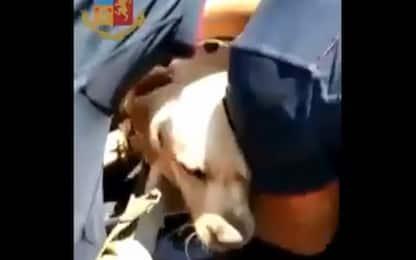 Napoli, cane chiuso in auto al sole: salvato dai poliziotti. VIDEO