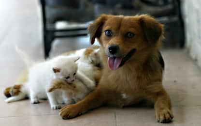 Covid, Corea del Sud: a Seul test su cani e gatti con sintomi