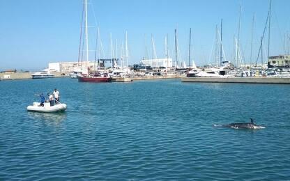 Ostia, delfino morto troppo decomposto: impossibile eseguire l'autopsia