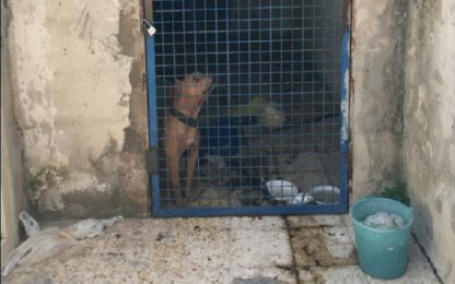 Napoli, scoperti due cani da combattimento a Secondigliano