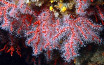 Coralli stampati in 3D: un prezioso aiuto per la crescita delle alghe