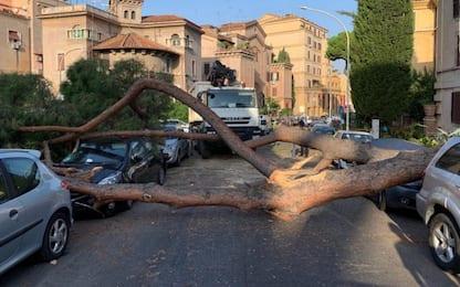 Roma, albero cade su tre auto alla Garbatella. FOTO