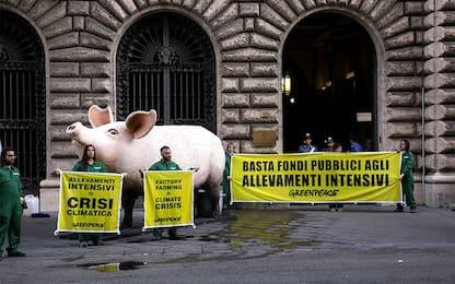 Greenpeace, maiale gigante contro allevamenti intensivi: video