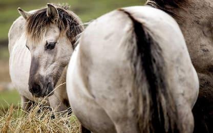 Palermo, corsa clandestina di cavalli sulla tangenziale