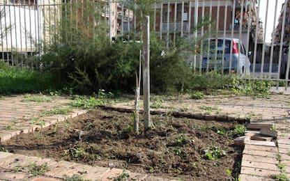 Ostia, distrutto l'Albero della Legalità in ricordo di Borsellino