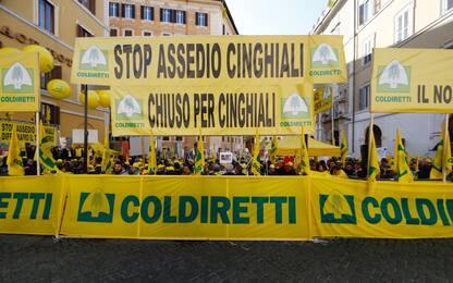 Coldiretti contro invasione cinghiali. Presente Salvini